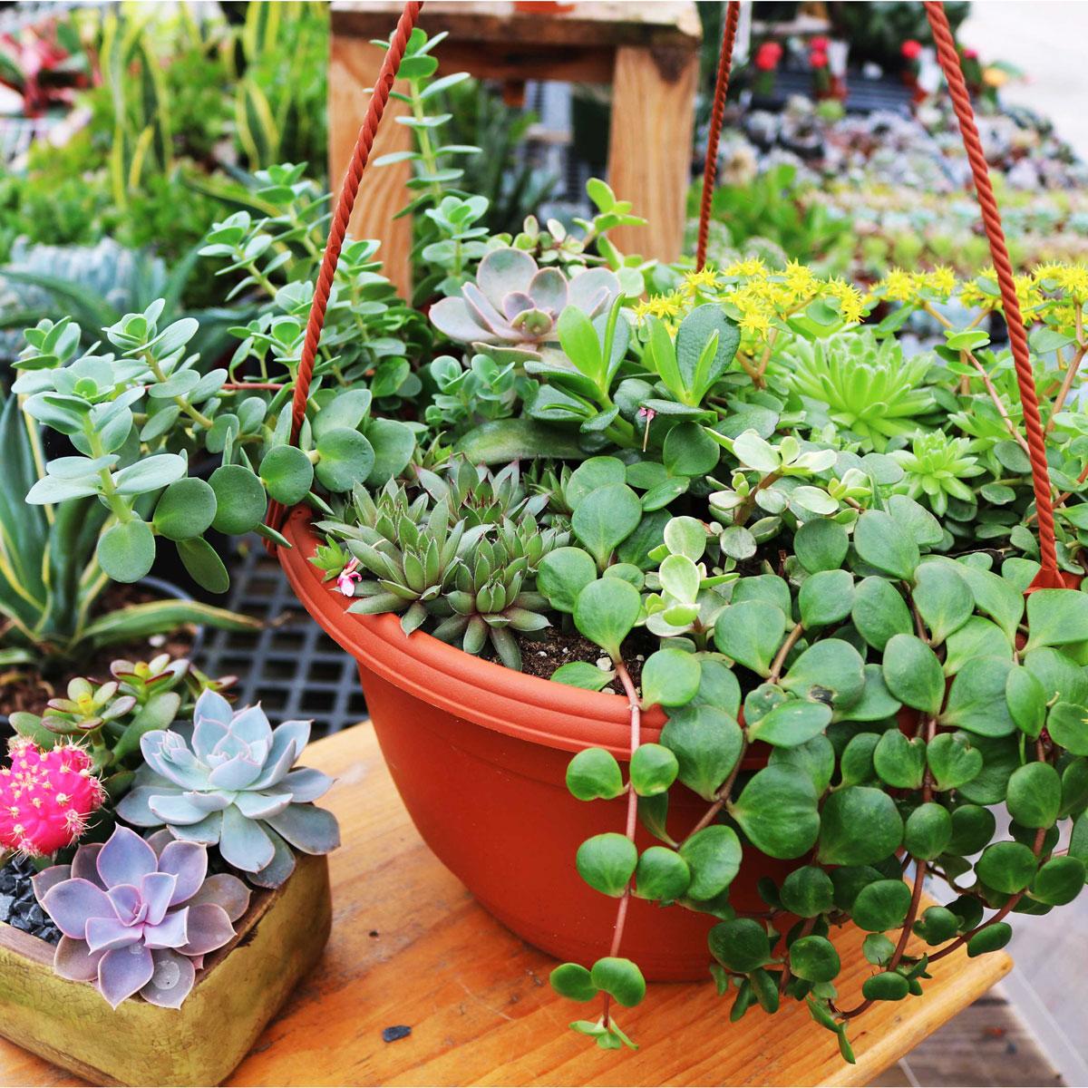 cutomplant