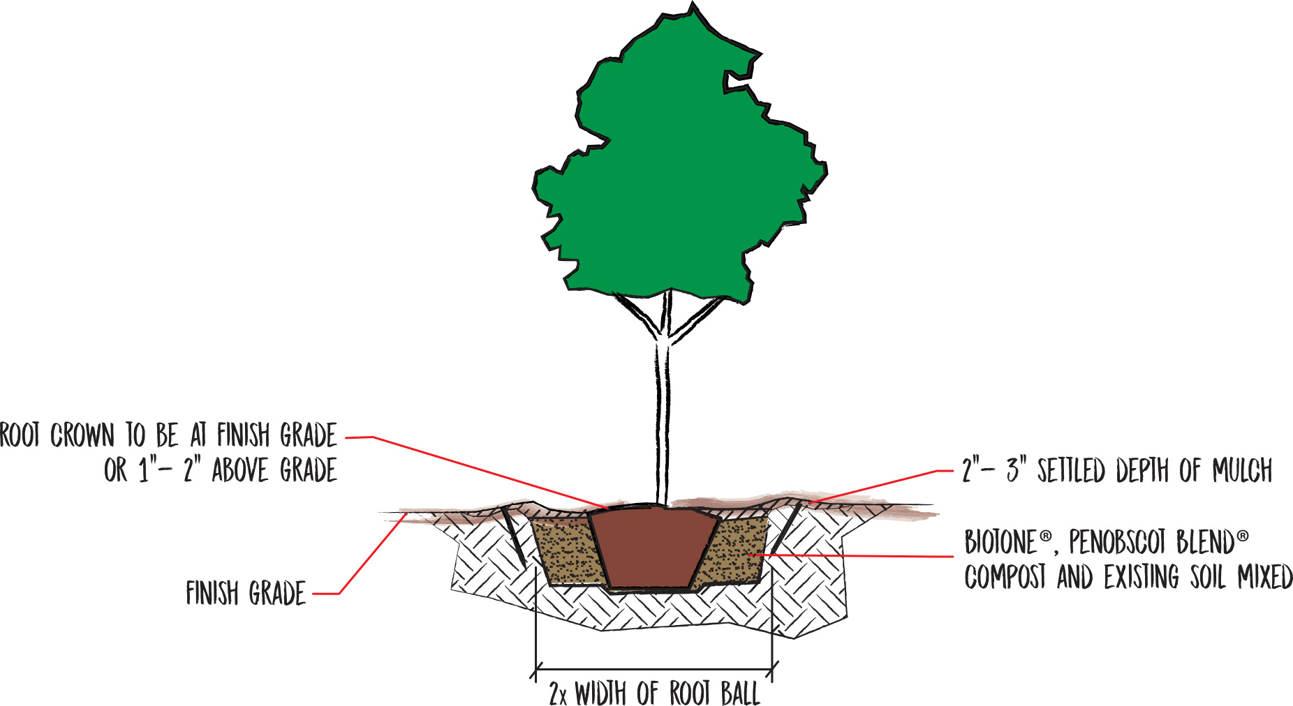 TypicalTreePlanting_Updated2018