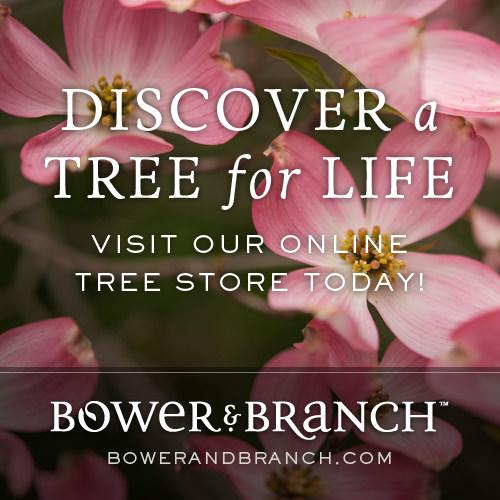 Bower&Branch