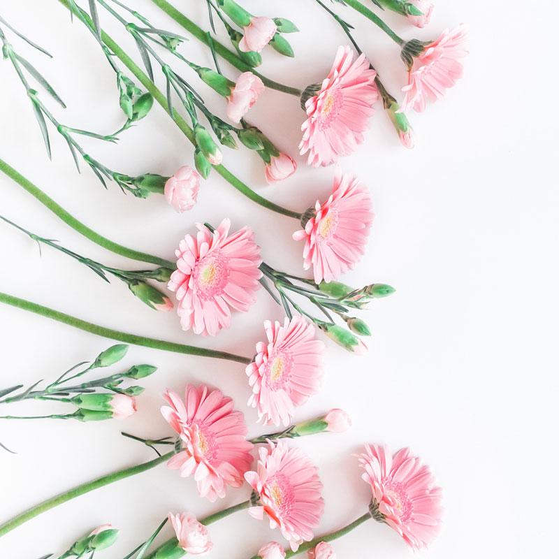 pinkflowers800